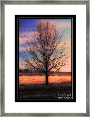 Winter Tree Framed Print by Kathleen Struckle