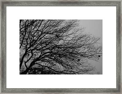 Winter Tree Framed Print by Kimberly Oegerle