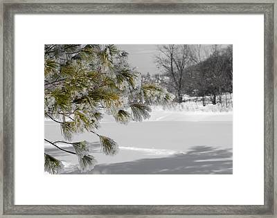 Winter Tree  Framed Print by Paulina Szajek