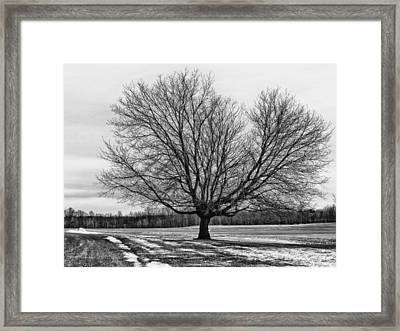 Winter Tree Framed Print by Susan Desmore