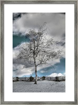 Winter Tree Framed Print by Todd Hostetter
