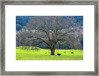 Winter Tree With Cows By The Umpqua River Framed Print