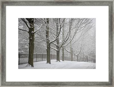 Winter Trees And Road Framed Print by Elena Elisseeva