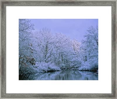 Winter Trees Framed Print by Carolyn Smith