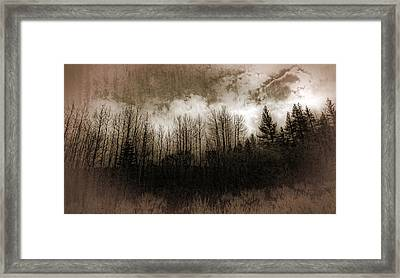 Winter Trees Framed Print by Dianne Phelps