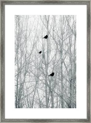 Abstract Crows In Winter Trees Framed Print