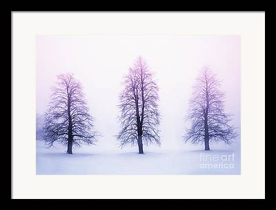 Winter Trees Framed Prints