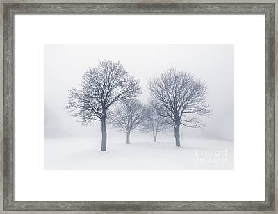 Winter Trees In Fog Framed Print by Elena Elisseeva