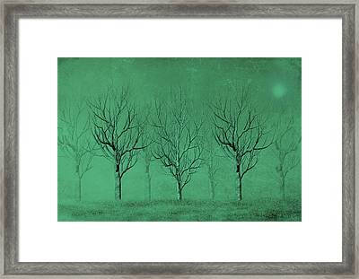 Winter Trees In The Mist Framed Print by David Dehner