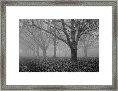 Winter Trees In The Mist Framed Print