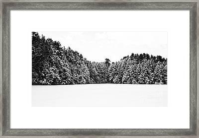 Winter Trees Mink Brook Hanover Nh Framed Print by Edward Fielding