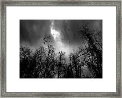 Winter Trees Moving Sky Framed Print by Bob Orsillo