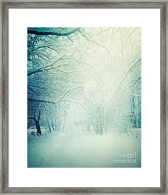 Winter Trees Framed Print by Mythja  Photography