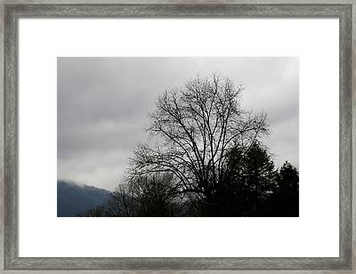 Winter Trees Number Four Framed Print