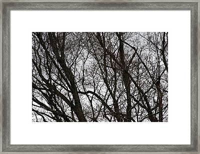 Winter Trees Number One Framed Print