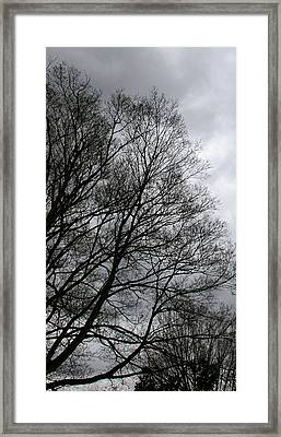 Winter Trees Number Three Framed Print