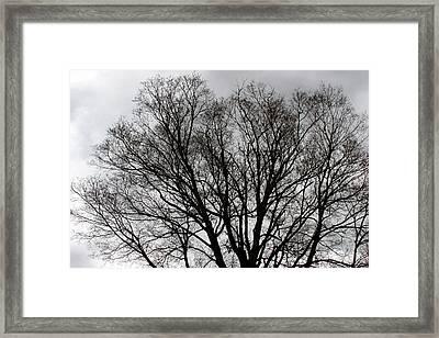 Winter Trees Number Two Framed Print by Paula Tohline Calhoun