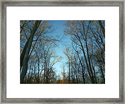 Framed Print featuring the photograph Winter Trees by Pete Trenholm