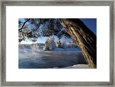 Winter Trees River Sweden Framed Print by Panoramic Images
