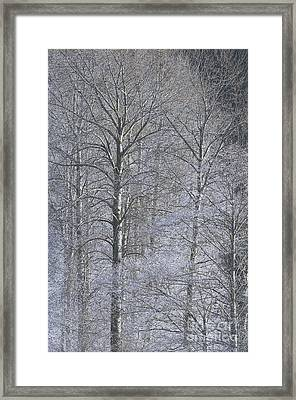 Winter Trees Framed Print by Sharon Talson