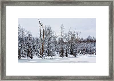 Winter Trees - Sydney Tran Framed Print by Sydney Tran