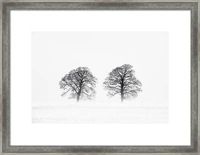 Winter Pine Trees Framed Print by Tim Gainey