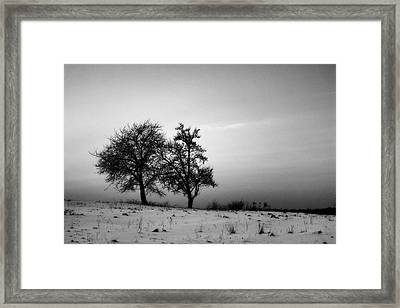 Winter Trees Framed Print by Tomasz Dziubinski