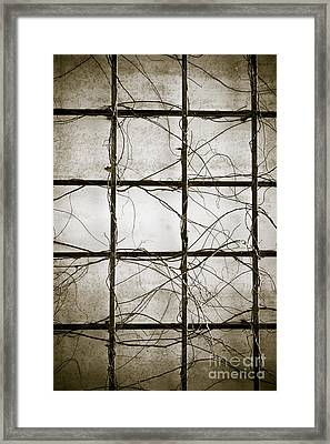 Winter Trellis Framed Print by Edward Fielding