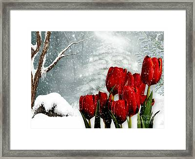Winter Tulips Framed Print