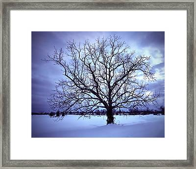Framed Print featuring the photograph Winter Twilight Tree by Jaki Miller