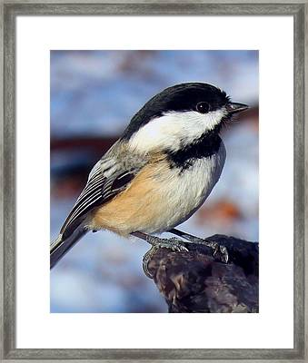 Winter Visitor Framed Print