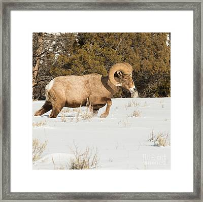 Winter Walk Framed Print by Birches Photography