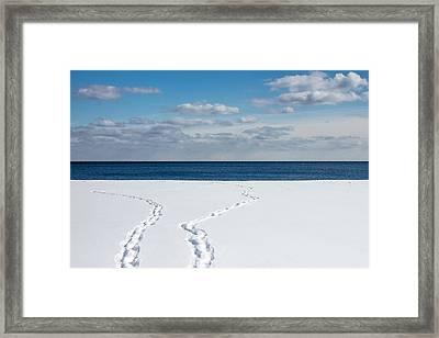 Winter Walks Framed Print by Kyra Savolainen