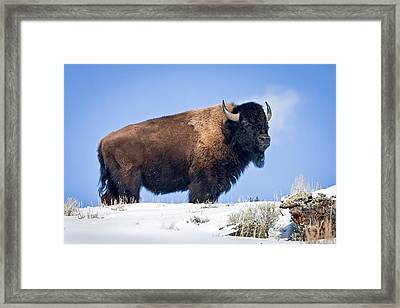 Framed Print featuring the photograph Winter Warrior by Jack Bell