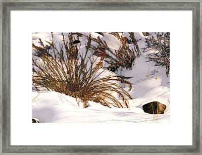 Winter Weeds Framed Print by Kae Cheatham