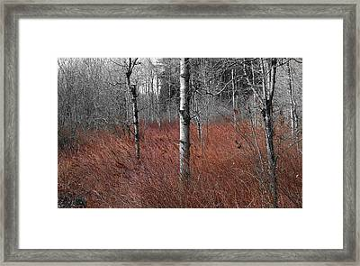 Framed Print featuring the photograph Winter Wetland by Jani Freimann