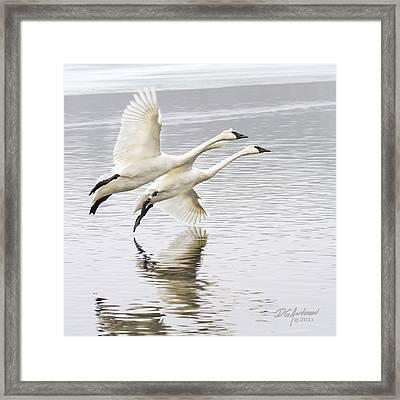 Winter White Framed Print