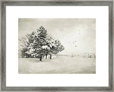 Winter White Framed Print by Julie Palencia