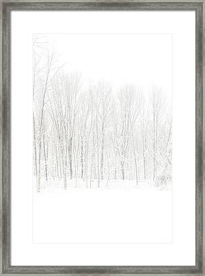 Winter White Out Framed Print by Karol Livote