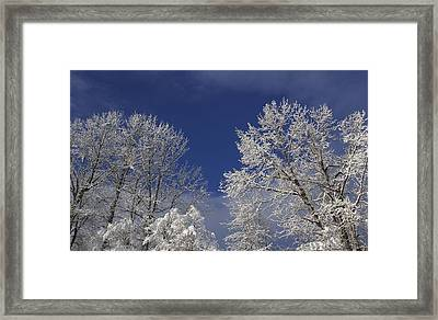 Framed Print featuring the photograph Winter White by Sylvia Hart