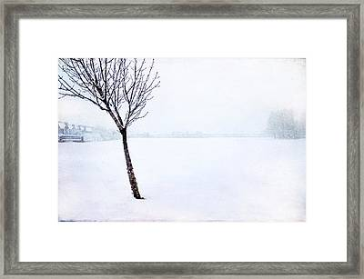 Winter Whiteout Framed Print