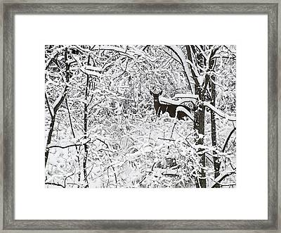 Winter Whitetail 2 Framed Print by Thomas Young