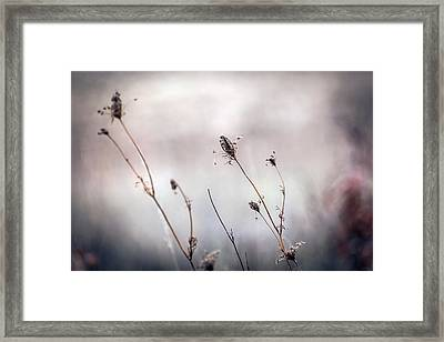 Framed Print featuring the photograph Winter Wild Flowers by Sennie Pierson