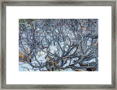 Winter Willow Framed Print by Jan Davies