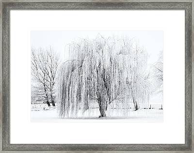 Winter Willow Framed Print by Mike  Dawson