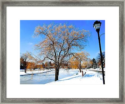 Winter Willow Framed Print by Frozen in Time Fine Art Photography