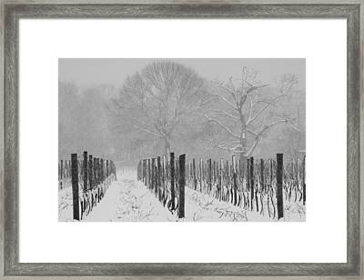 Winter Wine Framed Print by Steven Macanka