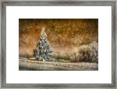 Winter Wonder Framed Print