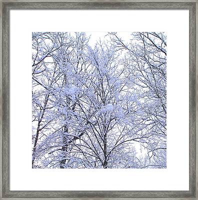Framed Print featuring the photograph Winter Wonderland by Candice Trimble