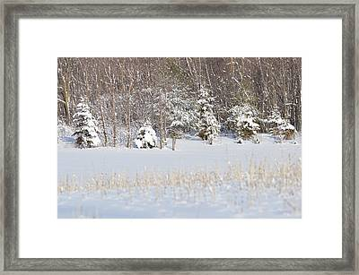 Framed Print featuring the photograph Winter Wonderland by Dacia Doroff